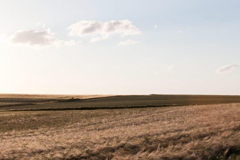 Ein Blick in die Landschaft. Im Vordergrund ist ein Weizenfeld.